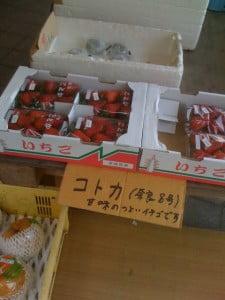 コトカ(苺)
